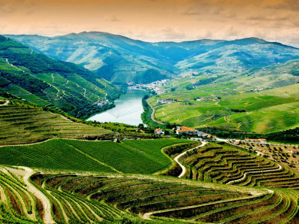 douro valley wine tour wonderful river with wineries and terraces