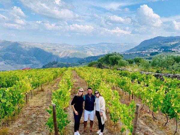 vineyards in douro