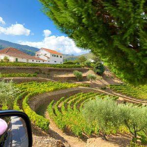 douro valley wine tour terraces